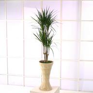 마지나타(긴마블분)웰빙식물